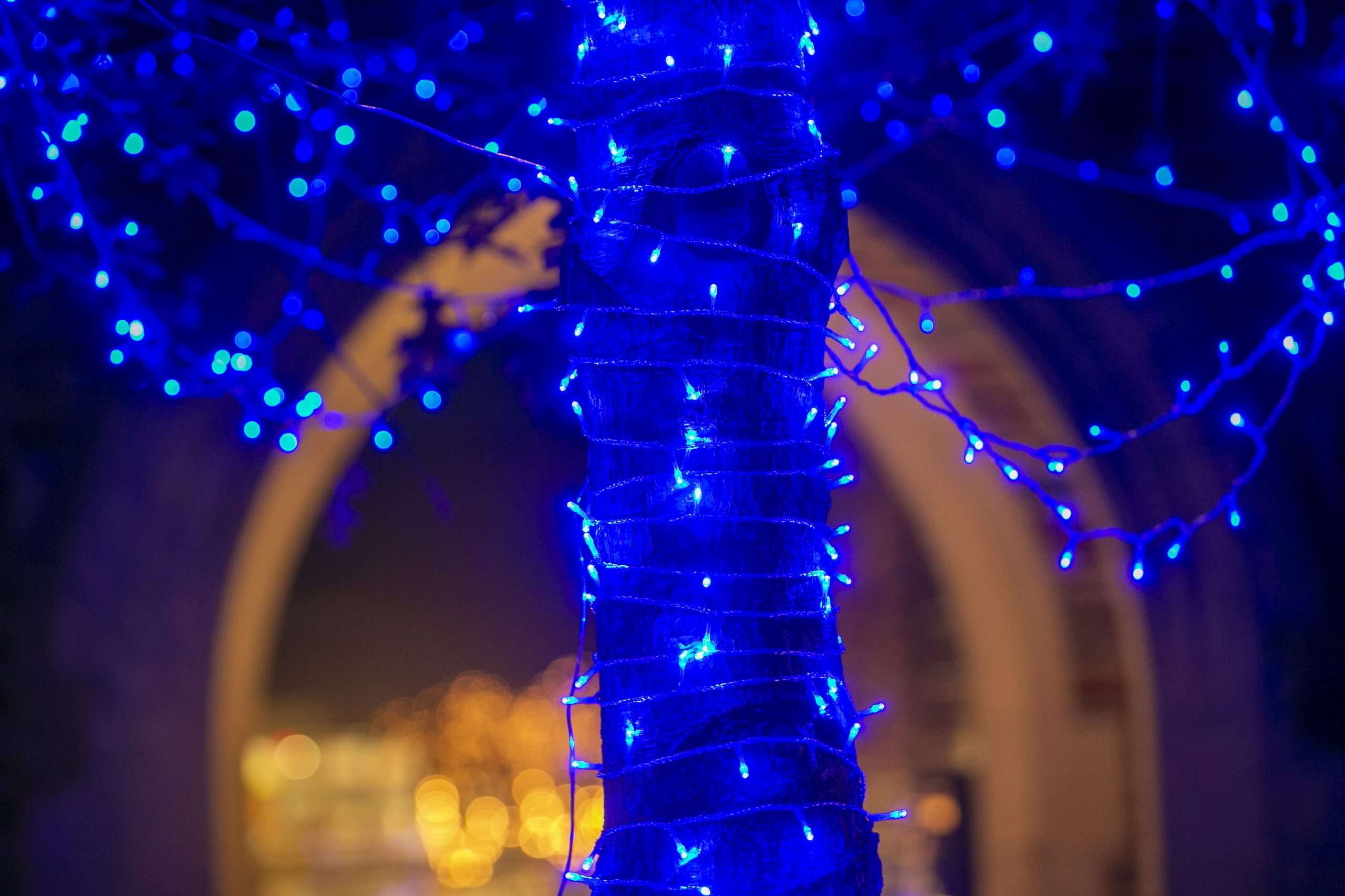 The University Communications team decorated a tree outside of the Brodhead Center with blue string lights for a holiday video.